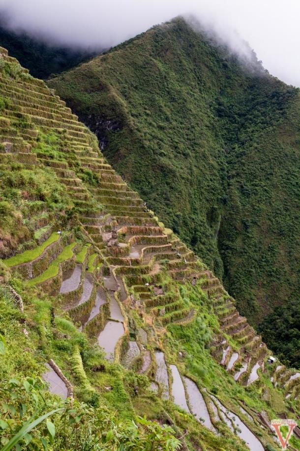 La traversée des rizières est un peu difficile