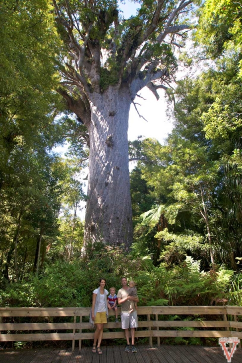 forêt de kauri northland